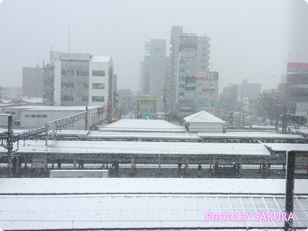 2015年1月30日雪